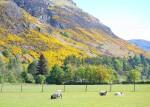 Ochil Hills | Scotland