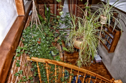 Looking down the stairs in our Safe Place in Riga, Latvia. I can still smell my plants.