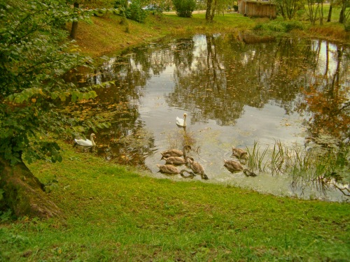 A small pond, alive with wildlife, and illuminated by the soft golden sunlight of autumn ...